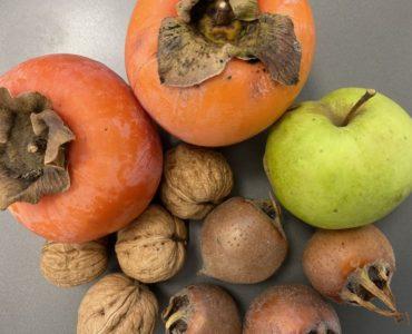 Frutta di stagione autunno